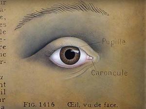 eyespots
